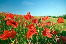 Poppies In The Wind by Paul Thompson Photography