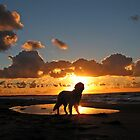 My Golden Retriever Ditte at the beach at sunset (Denmark, Kattegat, Odsherred) by Trine