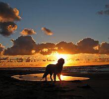 My Golden Retriever Ditte at the beach at sunset (Denmark, Kattegat, Odsherred) by Trine