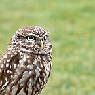 Little Owl by Sally Green