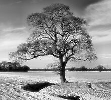 After the snow by clickinhistory