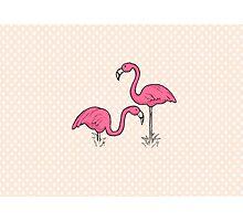 Pink Flamenco Flamingos Photographic Print