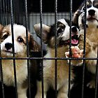 Happy Caged Puppies by Aaron Foo Chee Mun