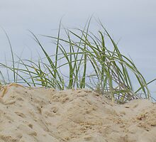 Dune Grass by Lou Van Loon