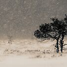 &#x27;Under the Snowstorm II&#x27; by Petri Volanen