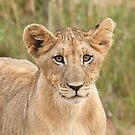 Lion Cub by Leon Rossouw
