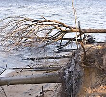 the results of strong winter winds by marianne troia