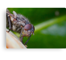 Fly Up Close Canvas Print