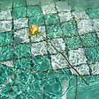 Water Rose by Greg Kaczynski