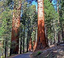 Sequoia Drive by Leona Bessey