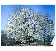Tree of White Poster