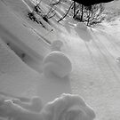 Snow Roses by bsilvia