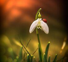 Spring messengers by NorbertG