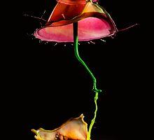 Red umbrella by JBlaminsky