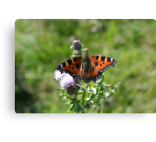 Butterfly on thistle 2 Canvas Print