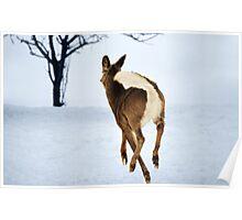 White Tailed Deer In Flight... Poster