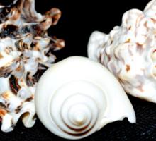 Sea Shell Beauty Sticker