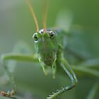 Grasshopper by AnnieSnel