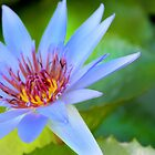 Blue Flower by Paula Bielnicka