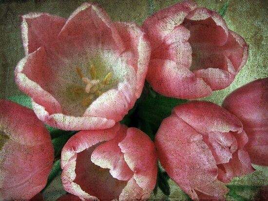 Wish by Anne Staub