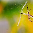 SPIDER by Agus Achmadyana