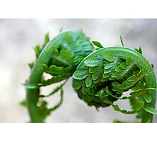 Furled Fronds Photographic Print