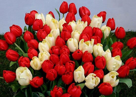 Tulip Bouquet 75 Years by Jo Nijenhuis
