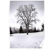 Tree in Landscape, Early Spring with Snow  Poster