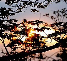 Sticky Sunset by DaveMont