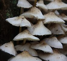 Mushroom Collection by Allison  Colarusso