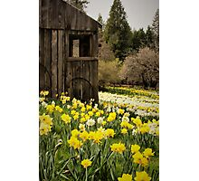 Country Spring Photographic Print