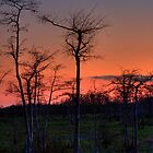 Sunset at Big Cypress National Preserve, Florida by Tomas Abreu
