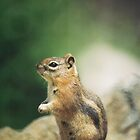 Wildlife: Chipmunk on Trail by Andrea Jehn Kennedy