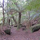 Julius River Forest Reserve Walk, Tasmania (2) by Margaret  Hyde