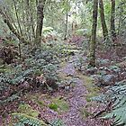 Julius River Forest Reserve Walk, Tasmania (3) by Margaret  Hyde
