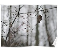Withered Winter Plant Poster