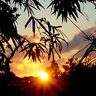 Bermuda Bamboo sunset by triciamary