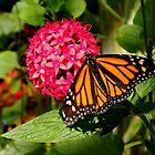 Monarch by Rosalie Scanlon