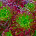 Succulently Beautiful by Greg Coggiola