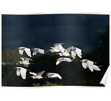 Sunset Roosting  Poster
