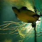 Sea Turtle in Motion by Violette Grosse