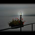 Seneca Lakes Night Life by Cheri Perry