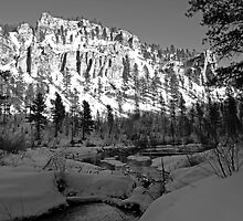 Spearfish Canyon by Dawne Olson