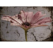 Tainted Beauty Photographic Print