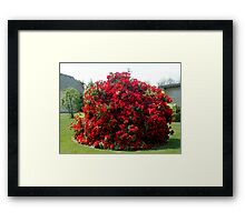 Neighbour's Rhododendrun Framed Print