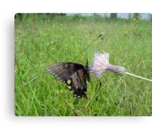 Eastern Tiger Swallowtail on Thistle Metal Print