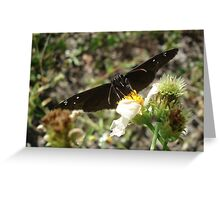 Zarucco Duskywing on Bidens alba Greeting Card