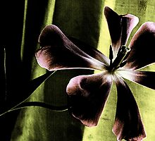 Tulip In The Shadows by Pamela Hubbard