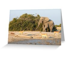 Elephants and Gazelle Greeting Card