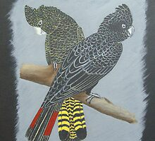 Australian Red-tailed Black Cockatoos by Sooty6